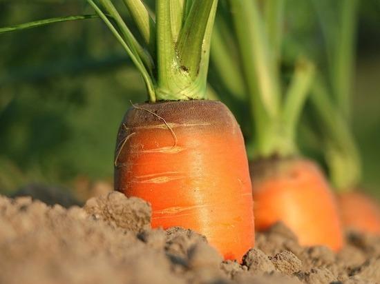 Нижегородская область увеличила экспорт сельскохозяйственной продукции