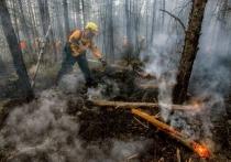 Причиной сибирских пожаров назвали «маленькую, очень хищную группу людей»