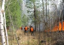 Специалисты обвинили в сибирских пожарах глобальные климатические изменения