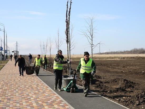 Тысячи деревьев высадят в Ставрополе за осень