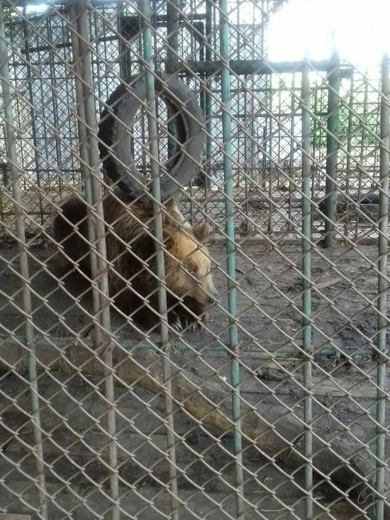 Три медведя с оренбургской трассы спасены мэром города Магас