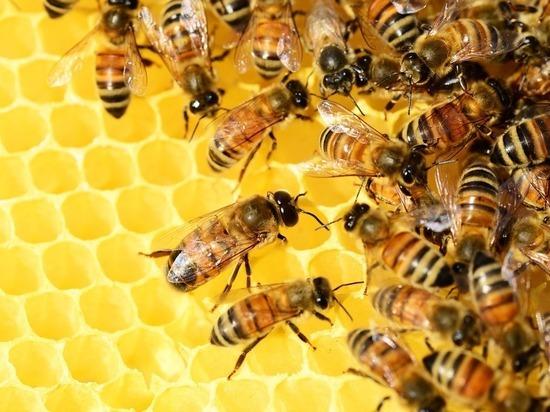 На совещании у Гордеева назвали количество погибших пчел