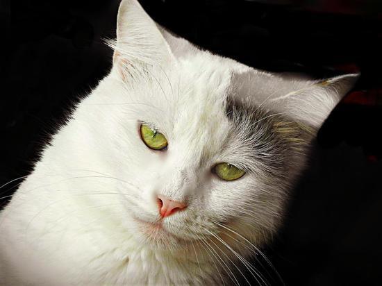 О пользе и опасности кошек рассказал российский эксперт