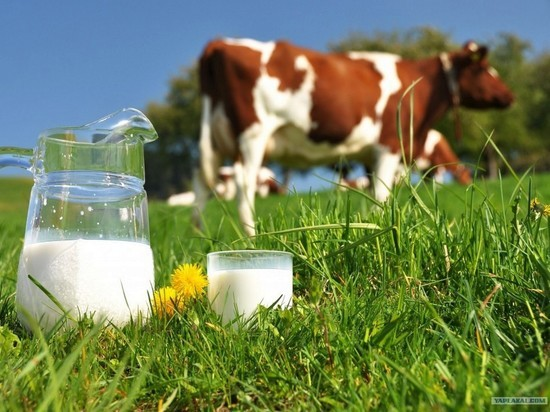 Оренбуржье стало 17 в рейтинге производителей молока