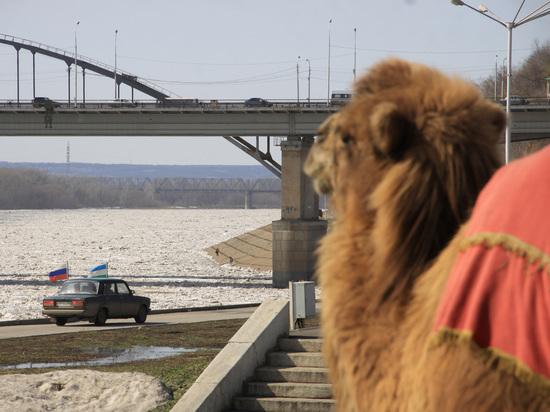 В Уфе для обитателей Арктики построят зоопарк