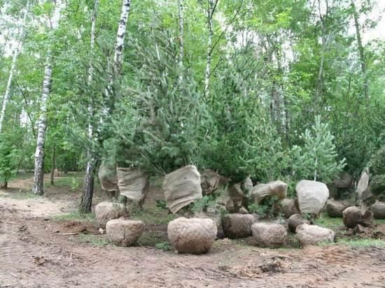 Более 100 деревьев высадили в Светлоярском парке