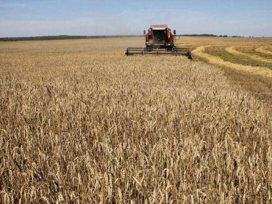 Курские аграрии собрали более 3,5 млн тонн зерна