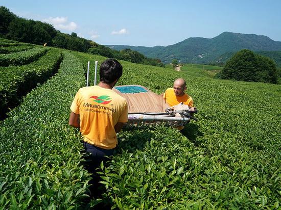 На международном конкурсе в Лондоне кубанский чай назвали элитным