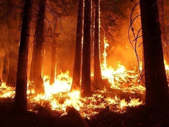 Генпрокуратура заявила о намеренных поджогах лесов в Приангарье