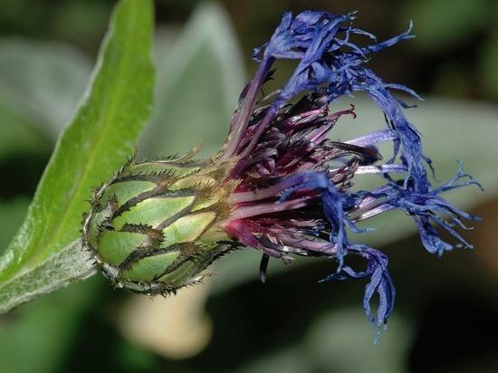 Специалисты назвали последствия холодного лета для растений