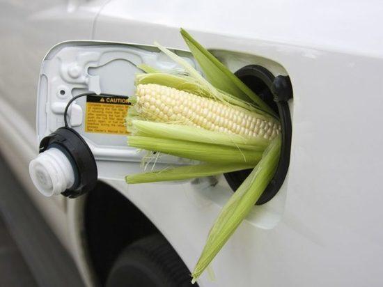 В Казахстане у биотоплива есть потенциал, но нет финансирования