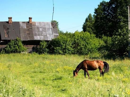 В Александровском районе юная наездница упала с лошади