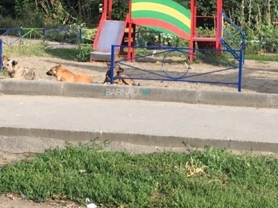 Бродячие собаки оккупировали детскую площадку в Барнауле