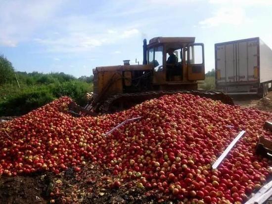 В Псковской области раздавили 21 тонну яблок из Польши