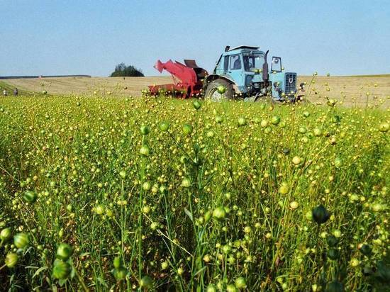Нижегородское правительство увеличило поддержку производителей льна