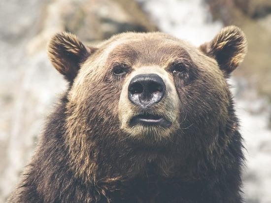 Жители поселка, где медведь загрыз девочку, взмолились: «Осталось Путину писать»