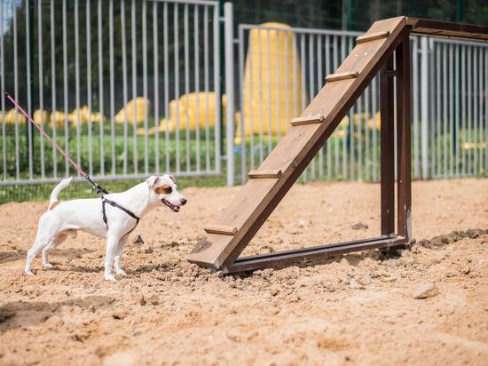 Площадки для выгула собак оборудуют во всех районах Ставрополя
