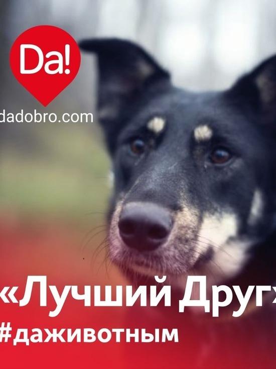 Акция помощи бездомным животным пройдет в Нижнем Новгороде