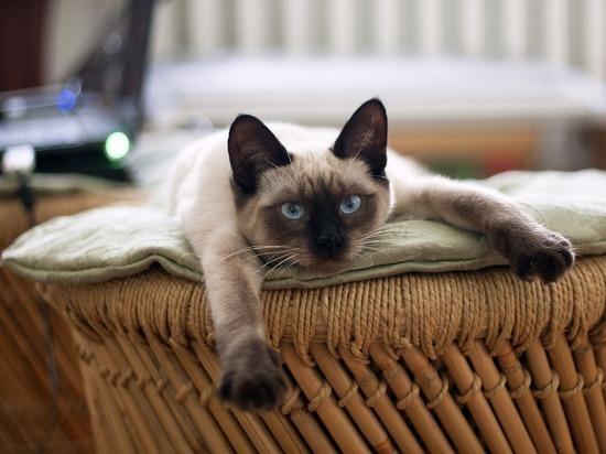 Всемирный день кошек 2019: чем домашние любимцы похожи на людей
