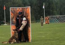 Военные кинологи рассказали о секретах дрессировки собак