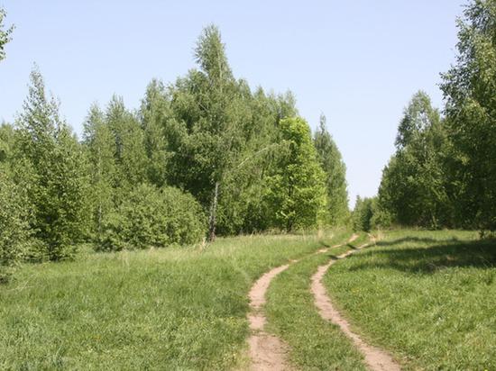 В лесу Тамбовской области нашли останки женщины