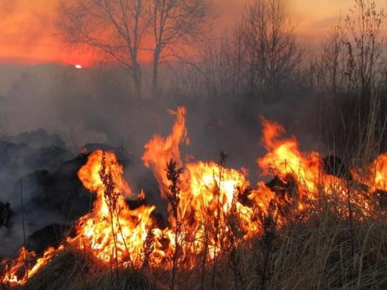 Площадь лесных пожаров в Приангарье перевалила за 700 тыс. га