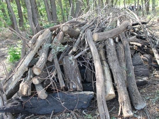 Подожгли и вырубили лес: происшествие в Краснохолме