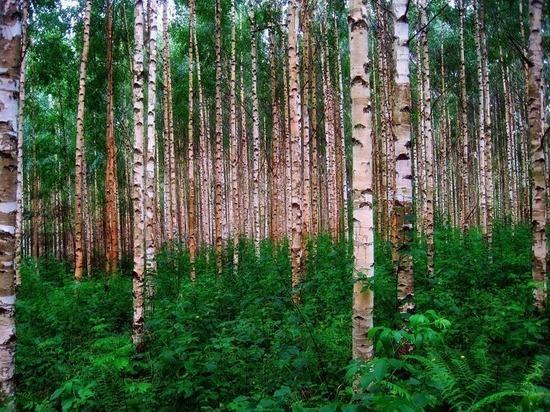 Нарубили дров: в Смоленской области нанесли ущерб государству на миллион рублей