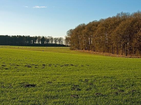 В Абдулинском районе поле засеяли не качественными семенами