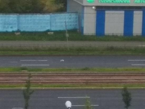 Таксист сбил гусыню, переводившую через дорогу своих птенцов