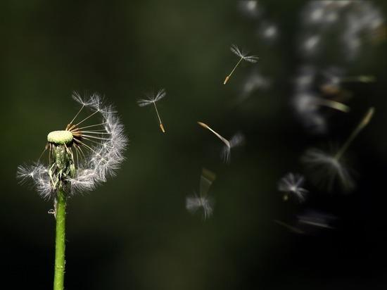 Понедельник в Удмуртии начнется с сильного ветра