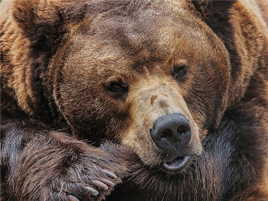 Врачи рассказали о состоянии хабаровской пенсионерки, отпугивавшей медведя