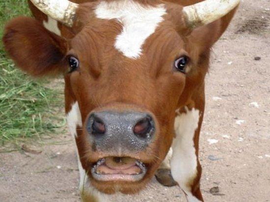 Не туда поставили: владельцам тульских магазинов указали на место для молока
