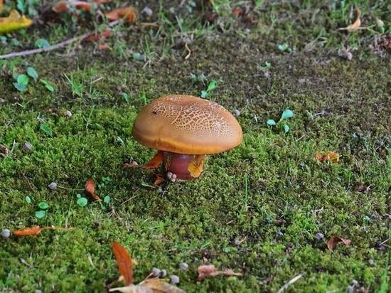 Жительницу Ноябрьска увезла «скорая» после употребления грибов
