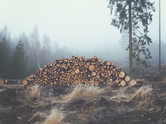 Почти 150 кубометров леса незаконно вырубили злоумышленники в Удмуртии