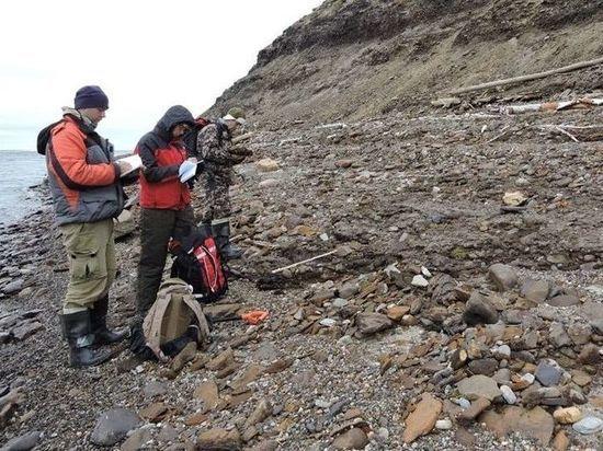 Новосибирские геологи открыли неизвестный род древних моллюсков