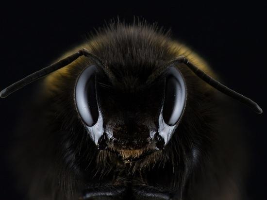 Зараженный мед пчел несет опасность для населения страны
