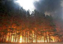 NASA: пожар в лесах Сибири — крупнейший за последние 10 000 лет