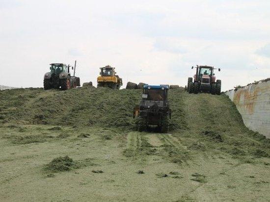На агрокомбинате «Белореченский» начата уборка овощей и зерна