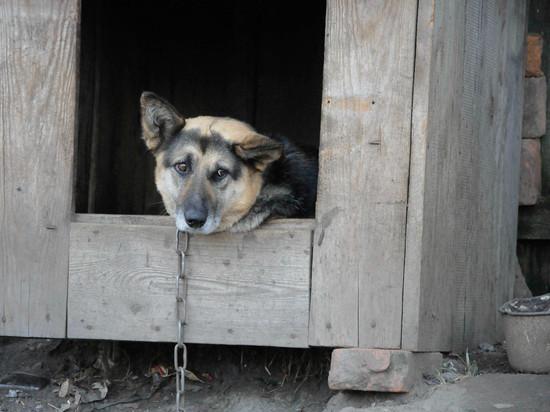 В Нижней Салде собаки искусали детям лица