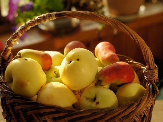 Липчан накормят яблоками