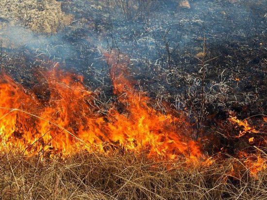 В Новосибирской области отвоевали село у подступающего пожара