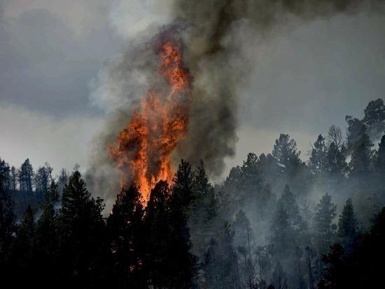 Крошечный лесной пожар вспыхнул и потух на Ямале