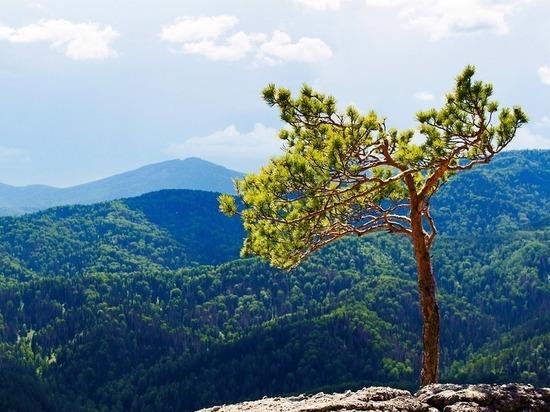 National Geographic номинировал Алтайский край на звание региона с лучшим оздоровительным отдыхом