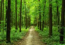В 2019 году в Рязанской области выявили свыше 800 нарушений лесного законодательства