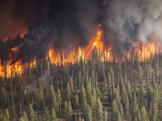 В Пуровском районе ЯНАО горит лес