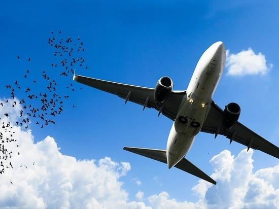 Эксперт оценил «птичью угрозу» для безопасности полетов: как избежать столкновения