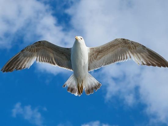 Названа птица, от которой чаще всего страдают самолеты