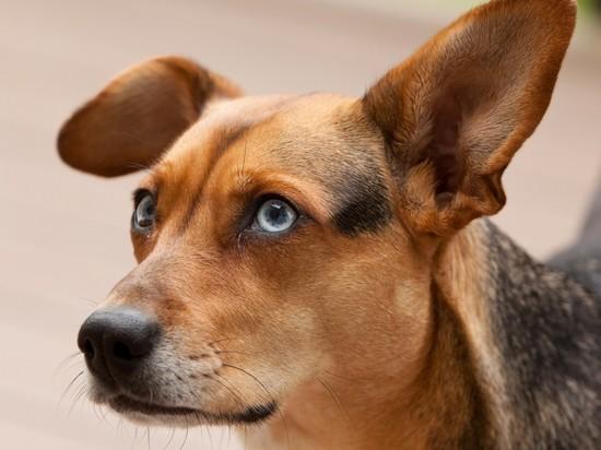 Новосибирский судебный пристав пристроил брошенных при выселении собак
