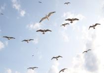 Птицы могли прилететь в аэропорт с реки